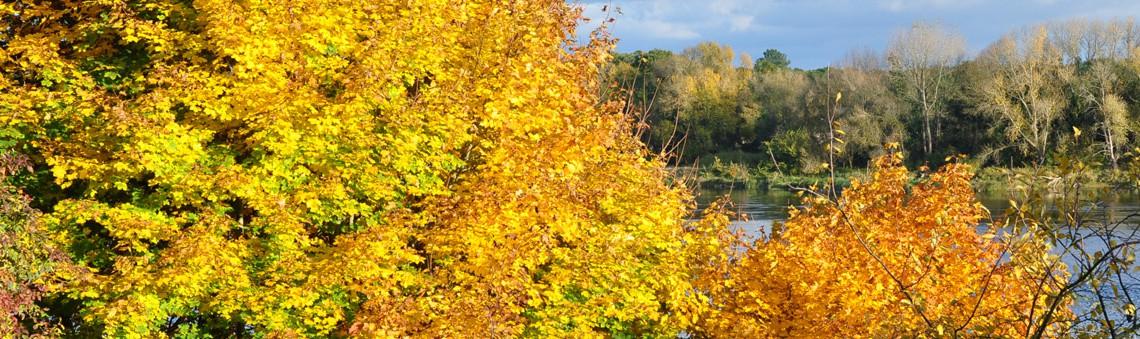 Couleur d'automne magnifique sur fond de Loire