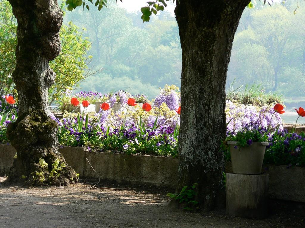 Arbres et fleurs