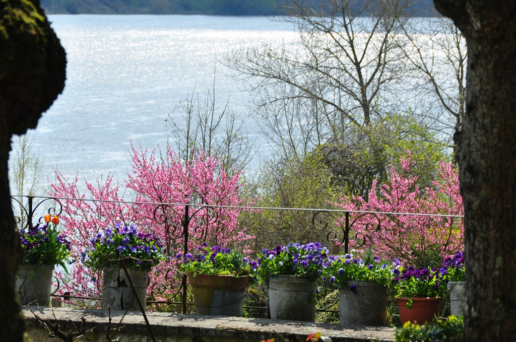 Flowers and Loire view